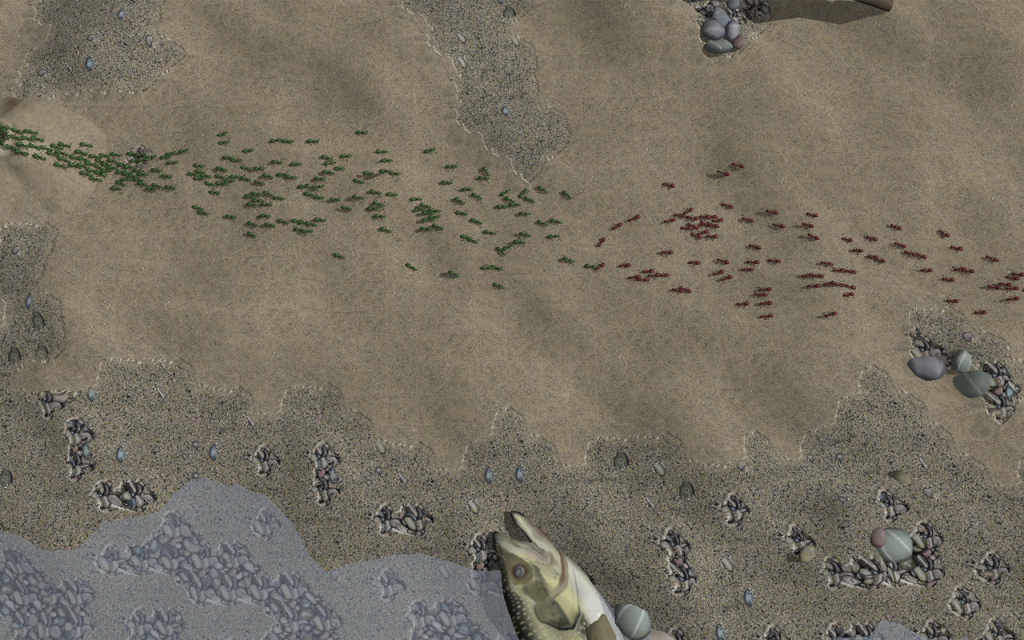 Two colonies clash on a beach.